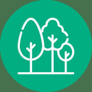 pipi plant